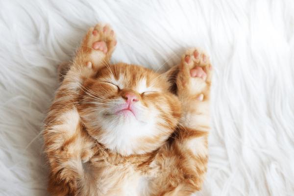 お風呂に毛布…暖かい夢は恋愛運も上昇する!冬アイテム夢占い4選