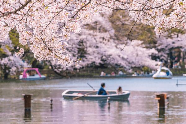 【ロフト】みんなで桜を咲かせよう!あのワニさんの追悼ポップアップストア開催