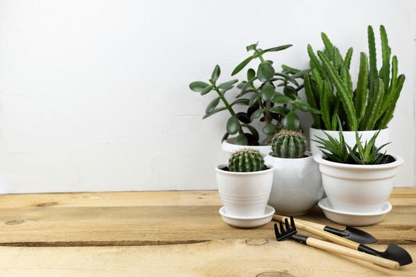 私だけの特別空間♡【IKEA】のオシャレで癒される観葉植物4選
