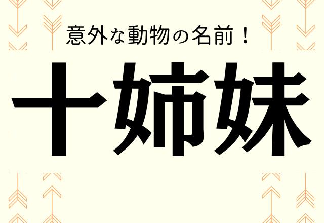 【十姉妹】←これ何と読む?意外な動物の名前!